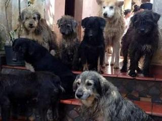 O dia em que eu cuidei de 70 cães sem tutor em São Paulo