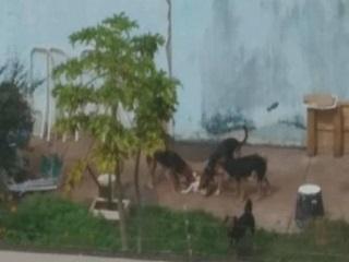 Polícia Ambiental recolhe cães famintos em casa de São José do Rio Preto, SP