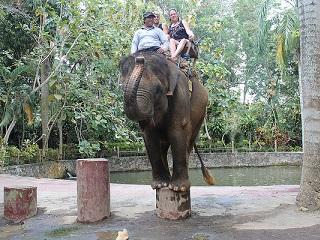 Não se iluda ou contribua com o abuso contra elefantes