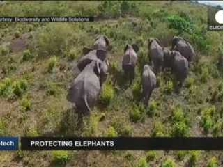 Drones ajudam a proteger elefantes na Tanzânia