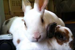EUA testes rabbits 1194x800 H