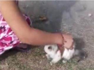México gato H