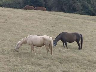 SP Marilia cavalos sacrificados2 H