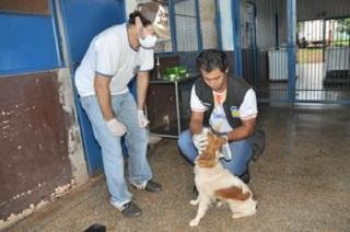 MS Dourados Animais recolhidos pelo CCZ são castrados e encaminhados para adoção.jpg H