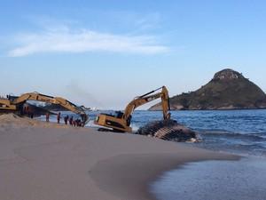 RJ Rio de Janeiro baleia