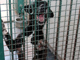 SP Piracicaba zoonoses deixa de receber animais H