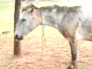 SP Rio Preto cavalo maustratos H