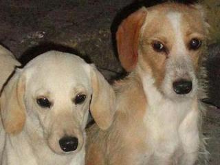 Mulher busca lar para cães abandonados em Pirajá, Salvador, BA