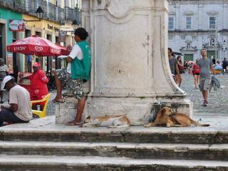 BA Salvador caes ruas H