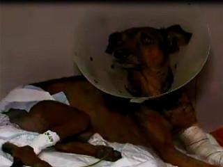 BA cachorro abuso H