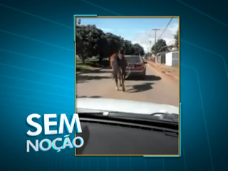 DF cavalo carro H