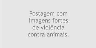 Mensagem mafiosa: corrida de galgos é proibida na Argentina e partes de cachorros apareceram por toda a cidade