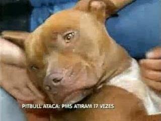 Policiais atiram 17 vezes contra pitbull e animal sobrevive