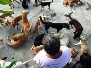 Animais abandonados salvos pelo poder das redes sociais em Jaboatão dos Guararapes, PE