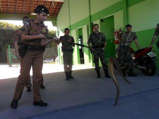 Policiais ambientais treinam captura de cobras em Maringá, PR