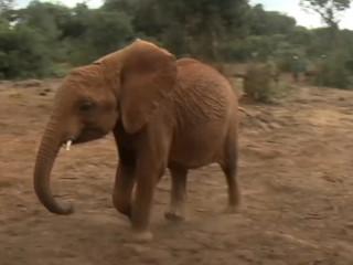 Quenia Nairobi elefantes H