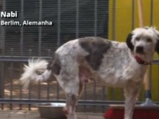 Alemães resgatam cães romenos condenados à morte