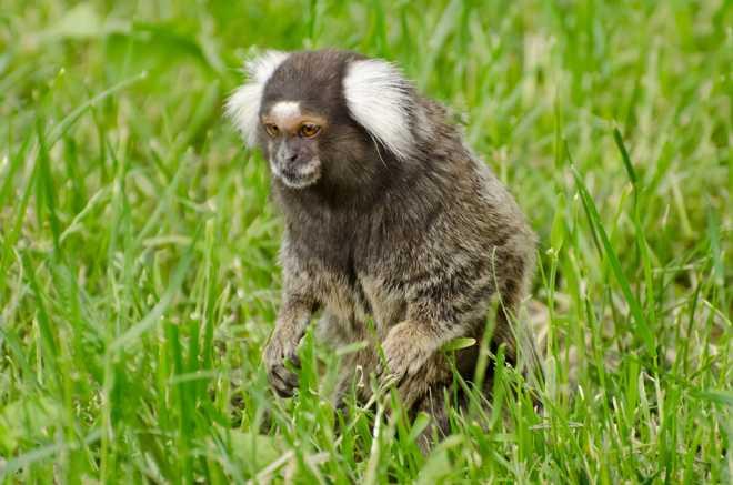 Nova matança ecologista de animais a caminho, agora em Floripa