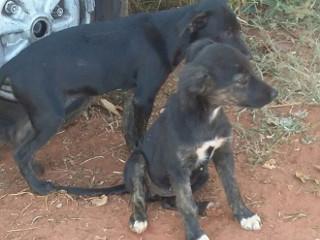 ONG impede abandono de cadela e cinco filhotes em Arealva, SP