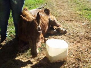 SP Fernandopolis cavalo morto H