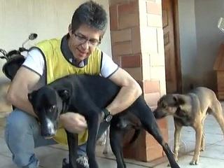SP: Rio Preto tem cerca de 100 mil animais abandonados, dizem protetores