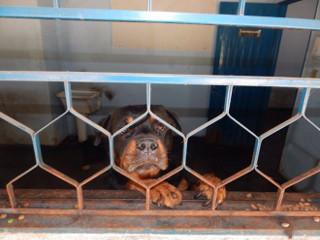 Empresário é multado em R$ 6 mil por maus-tratos a cães em Rio Preto, SP