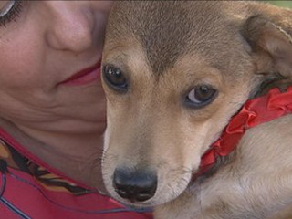 SP: Cadela rejeitada 3 dias após adoção por 'chorar demais' ganha novo lar