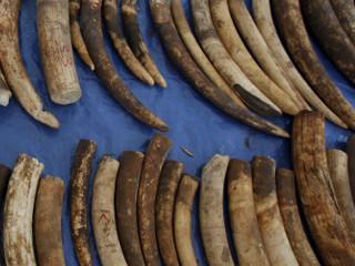 Tailândia destrói mais de duas toneladas de marfim