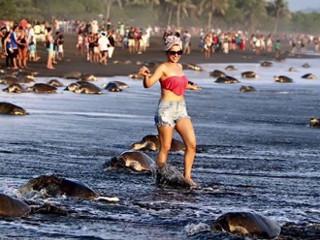 CostaRica likes tartarugas H