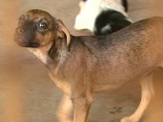 SP: Ribeirão Preto cadastra 300 animais domésticos para castração gratuita