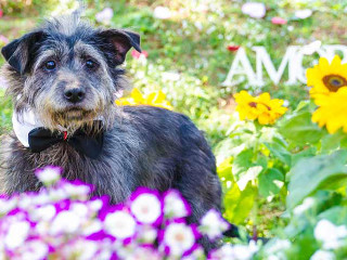 'Adote' lança campanha para conseguir lar temporário para animais abandonados em Taboão da Serra, SP