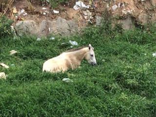 Cavalo é abandonado dentro do Riacho Salgadinho, em Maceió, AL