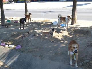 Morador de rua cuida de cães em canteiro de avenida em Maceió, AL