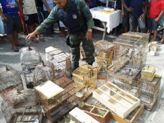 AL Marimbondo resgata animais silvestres H