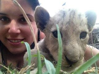 Voluntária faz campanha para salvar filhote de leão que viu crescer em projeto e viraria caça
