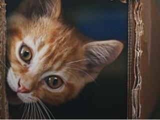 Austrália vai assassinar 2 milhões de gatos selvagens