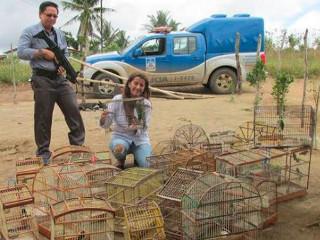Quase 60 pássaros são apreendidos em Governador Mangabeira, BA