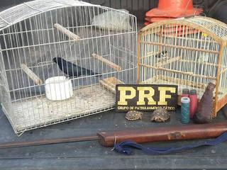 Animais silvestres são resgatados por policiais no município de Itaberaba, BA