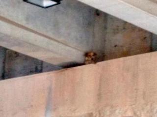 Cachorro cai e fica preso em túnel de Salvador, BA