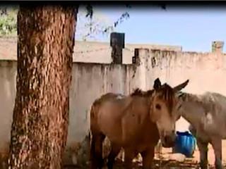 ONG resgata cavalos e égua que eram usados por traficantes em Salvador, BA