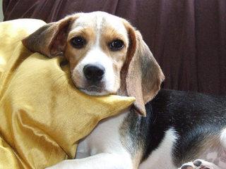Mutirão na UFBA promove atendimento gratuito a cadelas e gatas com tumores na mama