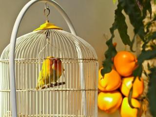 Projeto de lei na Bahia quer proibir o confinamento de pássaros em gaiolas