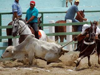 Retrocesso: Deputados aprovam projeto que transforma a vaquejada em prática desportiva e cultural na Bahia