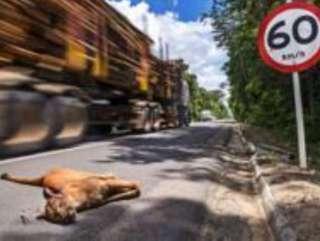 Brasil massacra 1 milhão de animais por dia em suas estradas
