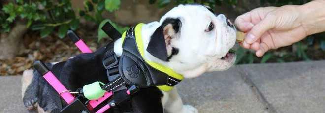 Animais em cadeiras de rodas vão derreter seu coração
