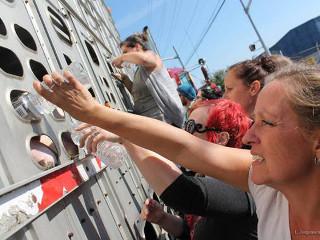 Mulher acusada de 'brincadeira criminosa' por dar água aos animais sedentos