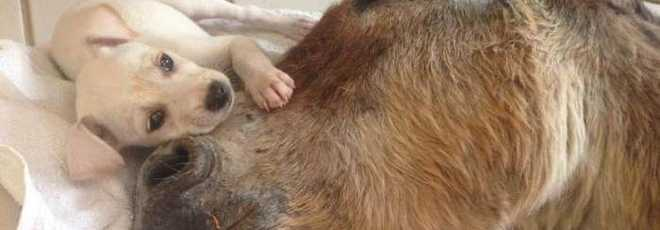 Cãozinho consola burro atropelado e imagem repercute na internet