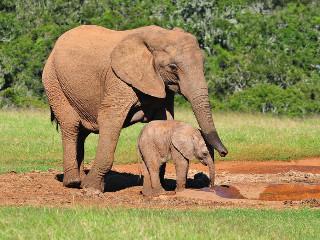 4 homens corajosos assassinados por tentarem salvar estes elefantes