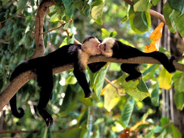 Costa Rica anuncia que vai fechar todos os zoológicos e libertar os animais