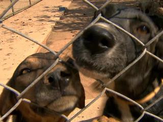 Abrigo de animais do DF destelhado após vendaval pede auxílio